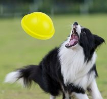 K9 Cirkáló Játék Kutyáknak