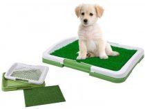 Kutya toalett-Hogy ne legyen kellemetlen meglepetés